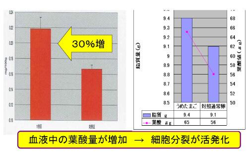 梅有用成分添加による葉酸濃度の変化