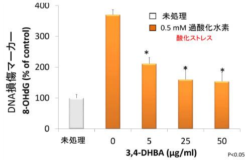 酸化ストレスによる細胞死に対する効果を検討2
